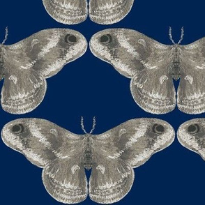 Rich Mystic Moth in Gray Area & on Navy
