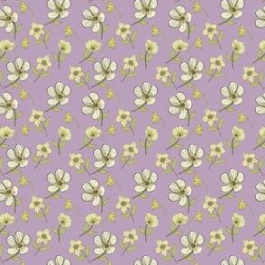 Buttercups Purple Background