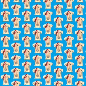 Ziggy Stardog Greyhound Blue