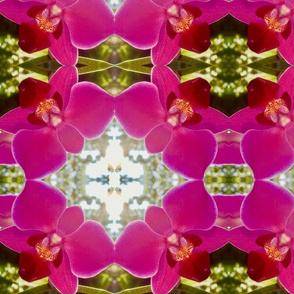 pink orchid sunlight white golden table runner tablecloth napkin placemat dining pillow duvet cover throw blanket curtain drape upholstery cushion duvet cover wallpaper fabric living decor