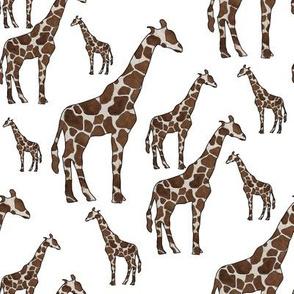 giraffe25300white